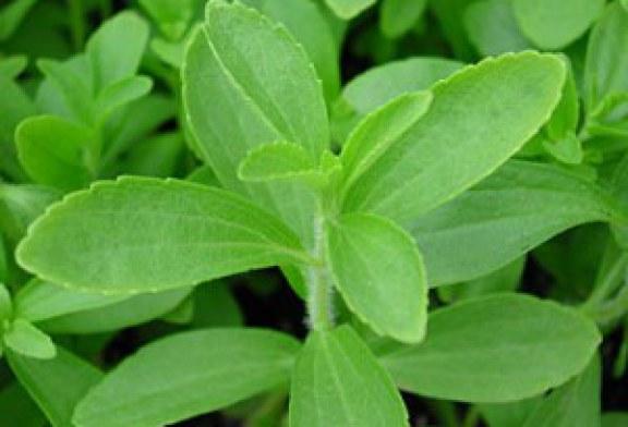 Stevia, proprietà e benefici