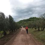 Salcus sotto la piogga a Zimella e Gambellara
